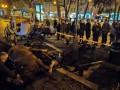 Напуганные петардой лошади травмировали девушку во Львове
