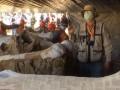 В Мексике на стройке нашли сотни скелетов мамонтов