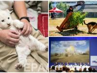 День в фото: расследование MH17, чемпионат кинологов и пятинедельный львенок