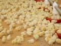 Птицеводы ответили на обвинения АМКУ в ценовом сговоре