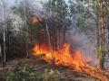Под Житомиром горит 15 га лесного массива