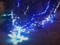В Тернополе ветер повалил новогоднюю ель на бульваре: Показано видео