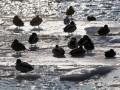 Вице-премьер Вилкул: По результатам борьбы с возможным паводком могут пройти новые увольнения