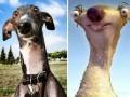 Забавные собаки, которые не похожи на себя