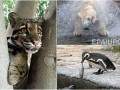 Животные недели: Завтрак пингвинов, добыча белого медведя и голодный тигренок