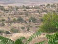 Конфликт в Нагорном Карабахе: Алиев и Пашинян назвали