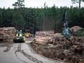 В Германии разрешили вырубку леса на участке для завода Tesla