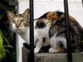 Защитники животных в Перу призывают не есть кошек