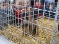 Во Львове похитили животных из контактного зоопарка