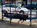 В Киеве на троллейбусной остановке умер мужчина