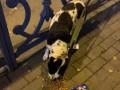 В Ровно 45-летний мужчина бил ногами ласковую собаку