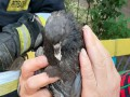 В Днепре ради спасения голубя подняли бригаду пожарных