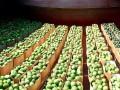 Урожай арбузов на Херсонщине вдвое выше прошлогоднего