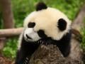 Видео дня:  Опасная форма для солдат и панда-обнимашка