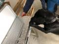 На Прикарпатье собака учуяла в посылке контрабандные сигареты