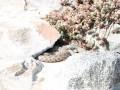 В центре Днепра на набережной нашли змею