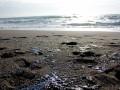 Пятна мазута покрыли пляжи оккупированного Судака