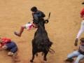 Разъяренные быки в Испании бодают любителей корриды