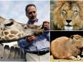 Животные недели: жираф-сладкоежка, грозный лев и интеллигентный капибара