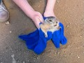 Видео о спасении суслика взорвало YouTube