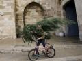 В Одессе можно взять новогоднюю елку напрокат