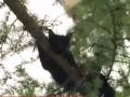 В Луцке засняли, как сотрудники ГСЧС снимали кошку с дерева