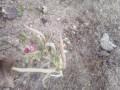 В Приазовье расцвели весенние цветы: Зима так и не наступила