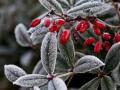 Погода на неделю: в Украине будет тепло
