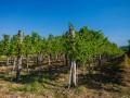 Майские заморозки уничтожили треть урожая фруктов и ягод