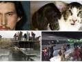 День в фото: Крещение на передовой, замерзающий поезд и необычный котик