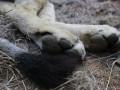 В Саратовской области лев напал на ребенка