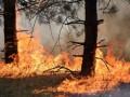 Под Станицей Луганской горит заминированный лес