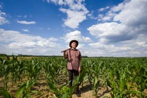 Кабмин выделил 4 млрд на поддержку аграриев