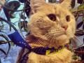 Животные недели: кот с символикой Евромайдана и новорожденные медвежата (ФОТО)