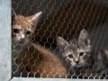 В Нидерландах три кота и собака заразились коронавирусом