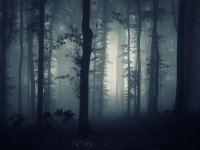 Две немки вывезли любовника в лес и бросили голым