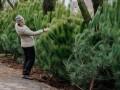 Где в Киеве купить елку с чипом и штрихкодом: 190 адресов