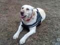 В Краматорске служебная собака нашла пропавшего ребенка