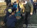 В Киеве тигров держали в ненадлежащих условиях: Их отдали специалистам