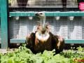 В Киевский зоопарк попала огромная редкая птица