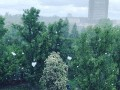 В Киеве выпал майский снег
