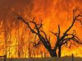 В Австралии бушуют лесные пожары: уничтожены не меньше 100 домов, есть погибшие