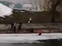 В Киеве спасатели вытащили из воды женщину с собакой