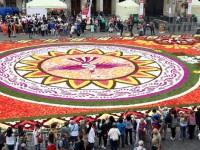 В Брюсселе стартовал фестиваль Ковер из цветов