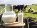 Украина увеличила экспорт молока в четыре раза