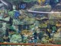 Акулы бизнеса: В Океан Плаза открыли аквариум