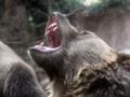 В Сибири медведь напал на человека в центре города