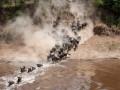 Тысячи антилоп прыгнули в реку с крокодилами
