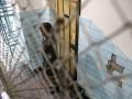 Названа причина гибели заключенных колонии в ЛНР