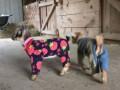 Видео с козлятами в пижамах взорвало интернет
